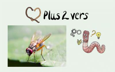 Come superare i moscerini in un vermicomposter?